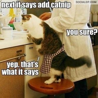 Catnip Addicted Cat