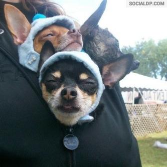 Dogs Wear Hoodies To Keep Their Brains Warm