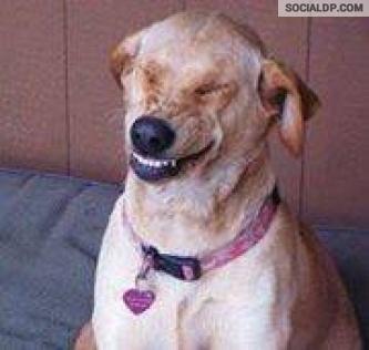 jajajajaja que risa